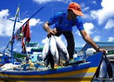 pescado-brasileiro