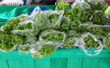 Em Manaus, empresa cria serviço delivery para alimentos orgânicos