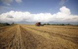 FAO lança livro sobre ações integradas de sustentabilidade agrícola