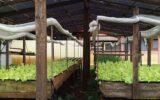 Hospital Yutaka Takeda em Parauapebas (PA) cultiva a própria horta orgânica para alimentação de pacientes.