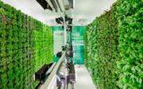 Supermercado Israelense utiliza hortas verticais para vender verduras frescas