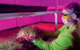 As fazendas urbanas que estão inovando a produção de alimentos