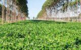 Agricultura regenerativa é chave para a produção de alimentos