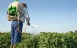 Governo federal registra mais 64 agrotóxicos; um é extremamente nocivo