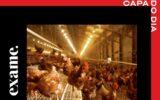 Ovos sustentáveis são a próxima revolução da indústria de alimentos