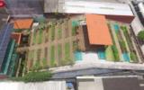 Horta feita em telhado de casarão antigo no Recife alimenta 500 famílias...