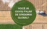 Sindemia Global